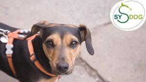 4 Bereiche einer Hundebegegnung – und worauf Du achten solltest!