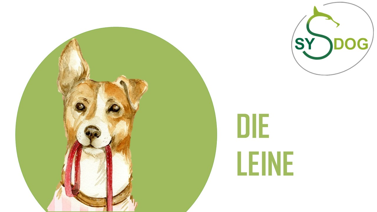 Hilfsmittel im Hundetraining: Teil 2:        DIE LEINE