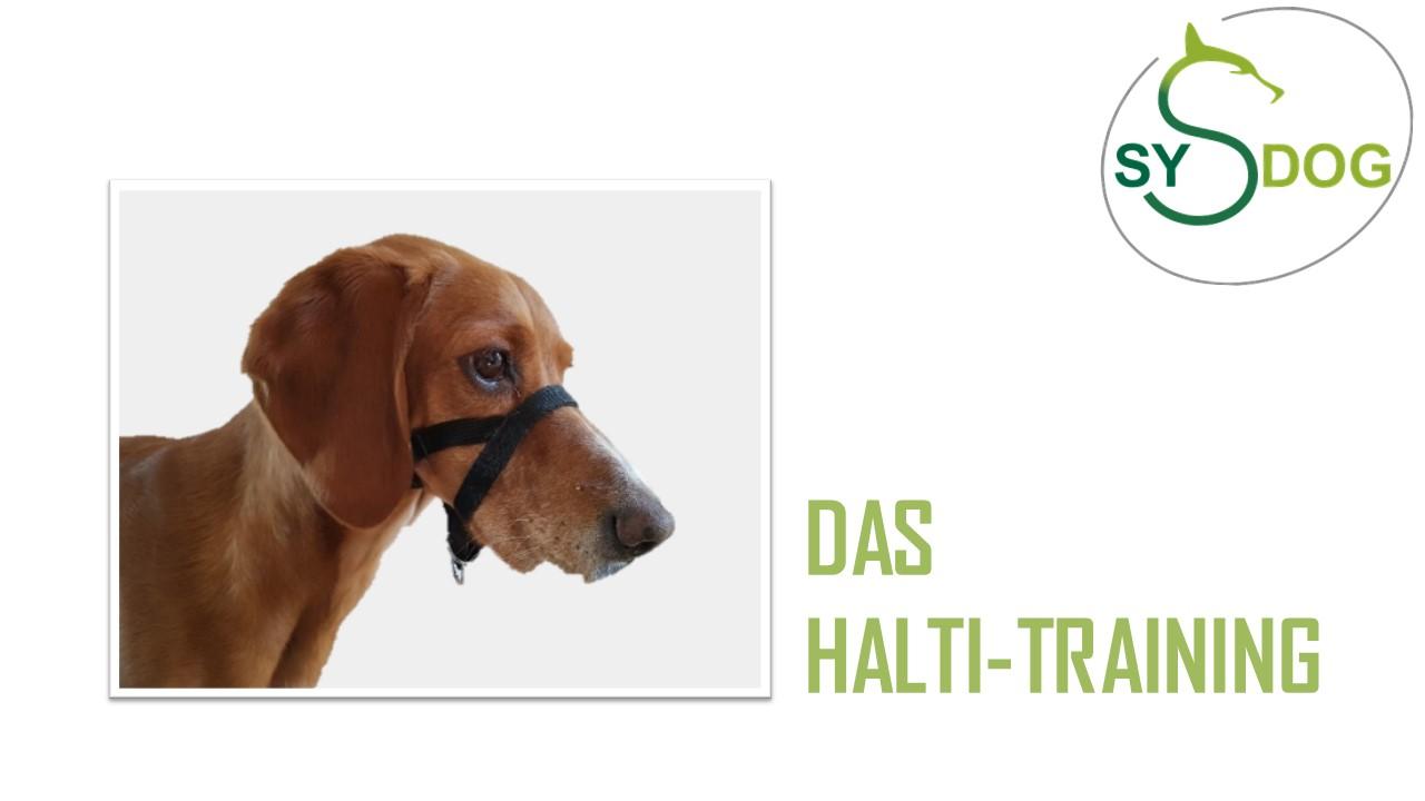 Hilfsmittel im Hundetraining: Teil 1:  DAS HALTI